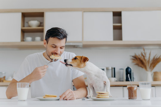Hungry man eats sweet pancakes, uses fork, drinks fresh milk, dog sticks out tongue, asks to eat, sit at white table in modern kitchen. Enjoying meal or dessert. Tasty snack. Mmm, how delicious