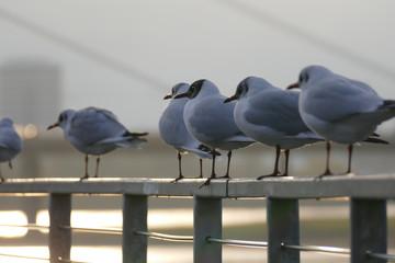 Möwen auf einem Geländer am Rhein