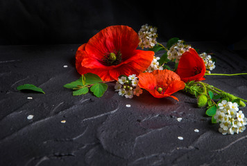 Wall Mural - Bouquet of red poppies and white Spiraea on a black background. Wild flowers.