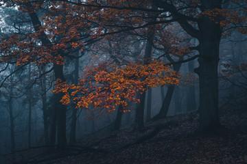 Herbstwald im Harz, Deutschland