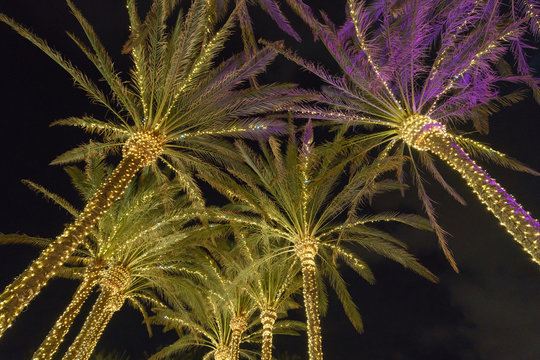Silhouettes of palm trees wrapped with white lights. White lights hanging from top creating patterns shot in the night sky. Concepts of tropical vacations, Christmas celebration and lifestyles.