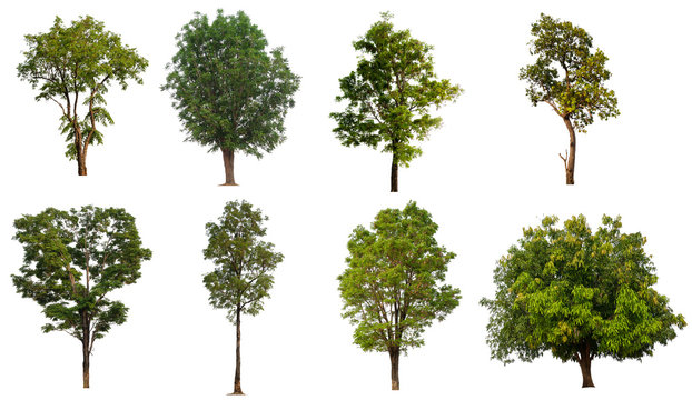 collection tree with cut out background