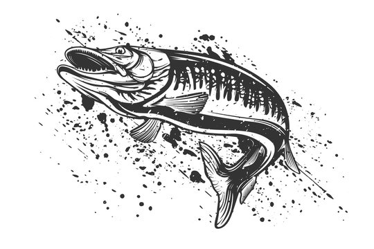 Pike fishing emblem shirt. Pike fish logo vector. Outdoor fishing background theme. Angry fish logo.