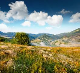 Wall Mural - Splendid summer scene of mountain valley. Sunny view of Carpathian mountains. Foggy lanfscape of Borzhava ridge, Ukraine, Europe. Beauty of nature concept background..