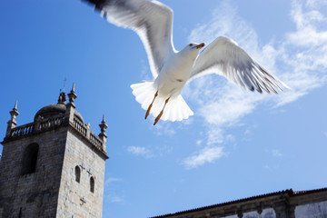.seagull flying in the cathedral of Porto