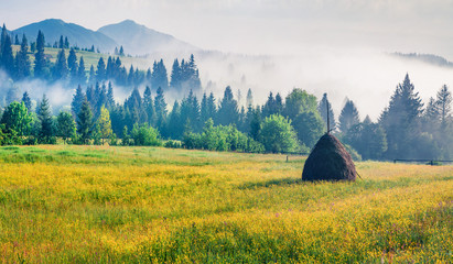 Wall Mural - Haymaking in a Carpathian village with carpet of yellow flowers. Foggy summer scene of misty mountains. Colorful norning view of Borzhava ridge, Ukraine, Europe. Beauty of nature concept background.