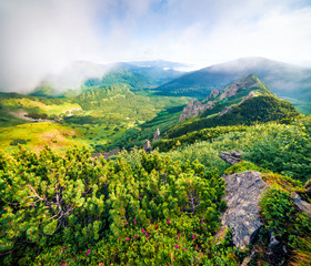 Wall Mural - Colorful summer scene of foggy Carpathian mountains. Chornogora ridge, Ukraine. Attractive morning view of rocky mountains. Beauty of nature concept background.