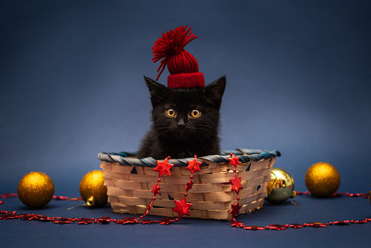 Black kitten wearing red hat in wicker basket with Christmas toys