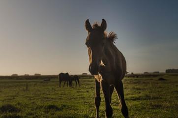 Little race's horse in the field