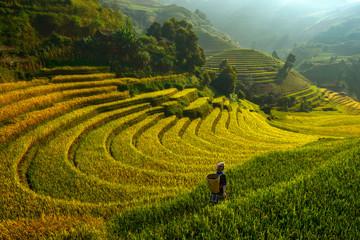Foto auf Acrylglas Reisfelder Bright morning of rice terraces in Mu cang chai,Yenbai,Vietnam.