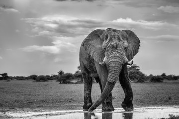 Keuken foto achterwand Olifant elephant in the park