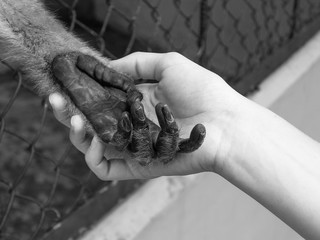 Black and white photo of caged monkey holding human hand, animal rights concept