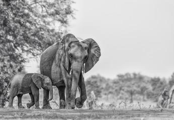 Autocollant pour porte Elephant elephant isolated on white background