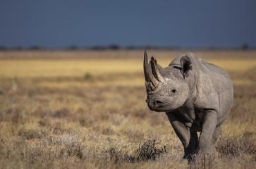 Photo sur cadre textile Rhino Black Rhino