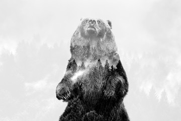 Minimal style double exposure with a bear and misty mountains Wall mural