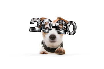 dog celebrating new year with paws over a white blank wearing glasses with the text 2020 on a white background