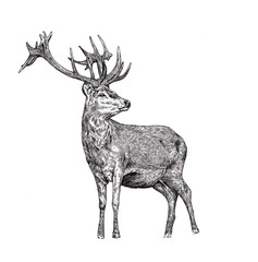 Images of a deer, graphics, liner