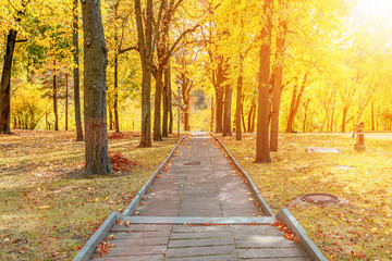 Beautiful romantic alley in a park with colorful trees and sunlight through it. autumn natural background between maple leafs