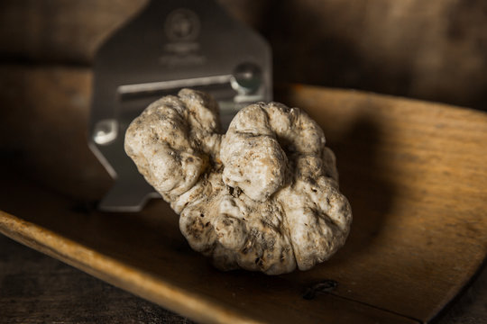 White Truffle on wood background with Truffle Slicer