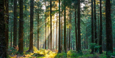 Foto op Canvas Grijze traf. Silent Forest in spring with beautiful bright sun rays