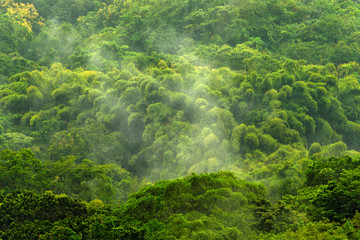 Tropical forest during rainy day. Green jungle landscape with rain and fog in Santa Marta, Colombia. Mountain birdwatching in South America.