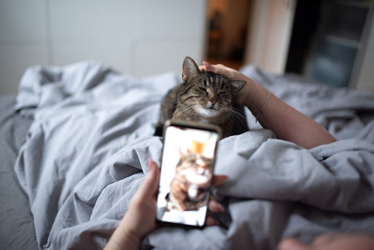 unrecognizable woman lying in bed stroking tabby domestic shorthair cat photographing with smart phone