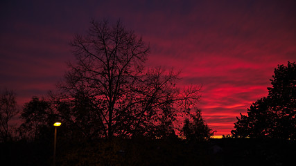 Beautiful sunset with silhouetted trees