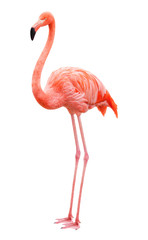 Aluminium Prints Flamingo Bird flamingo on a white background