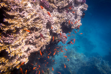Wall Murals Coral reefs Underwater coral reef with plenty of tropical fish