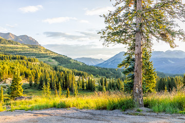 Landscape sunrise view of San Juan mountains in Silverton, Colorado in 2019 summer morning with meadow valley and spruce tree