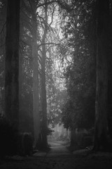 Vintage, retro photo of old graves and tombstones in an ancient cemetery. Grainy, noisy, artistic monochrome image. Halloween, all saints concept