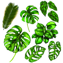 Set of tropical leaves isolated on white background. Vector. Can be used fotr any kind of design.