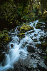 Beautiful flowing creek through lush mossy tranquil forest of Oregon