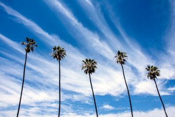 Palm Tree Skyscape