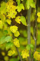 Colorful leaves in autumn forest.  Velez-Rubio, Almeria,Spain