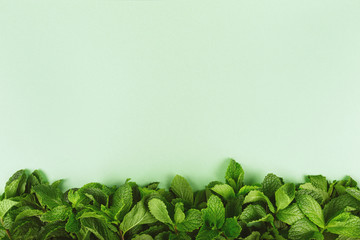 Trendy green background with fresh mint leaves border at the bottom, place for text Wall mural