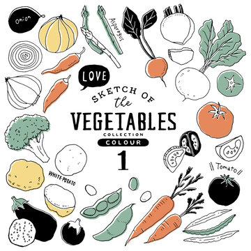 オシャレな手描き野菜セット01/カラフル