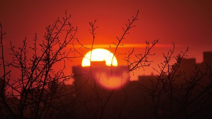 Fotobehang - Sunset sun setting in red sky behind leafless tree and dark city skyline. Timelapse, 4K UHD.