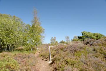 The Heather trail near Studland beach on the Dorset coast in South England