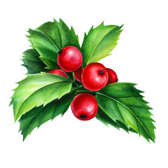 Set of holly branch on an isolated white background, christmas plants, watercolor hand drawing