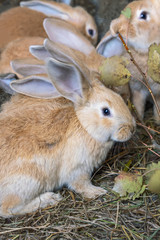 Group  little cute rabbits in a cage eating fresh aspen leaves