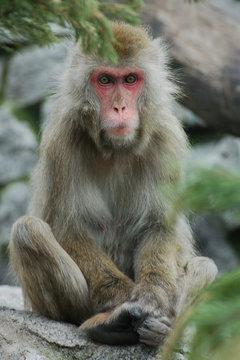 Monkey sitting outdoors on stone