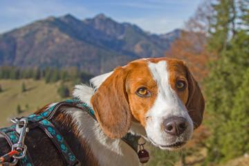 Beaglewanderung zum Trainsjoch