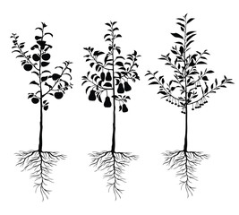 Vector illustrations of silhouette seedling young fruit  trees with roots and fruits set