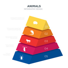 animals concept 3d pyramid chart infographics design included cockroach, cocoon, coyote, desman, echidna, _icon6_, _icon7_, _icon8_ icons