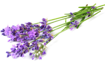 Foto op Plexiglas Lavendel lavender flowers isolated on white background. bunch of lavender flowers.