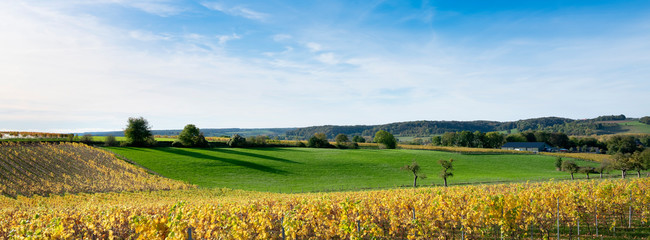 autumn viniyards and rural landscape in dutch province of south limburg on sunny day