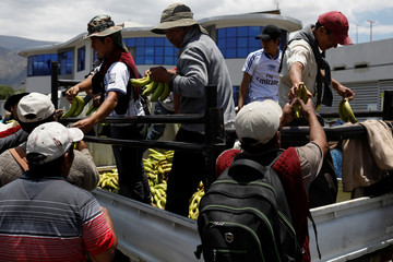 Men hand out bananas to their fellow coca farmers and supporters of Bolivia's ousted President Evo Morales as they stage a blockade of an entrance to Sacaba