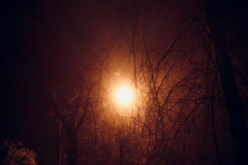 Scattered in the fog light from a night lamp