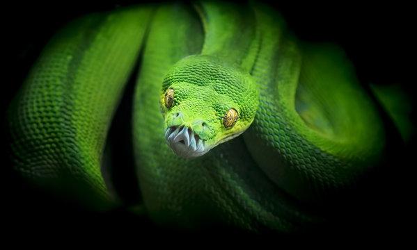 Green snake in ZOO Liberec